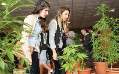 A rota do turismo canábico em Montevidéu está traçada
