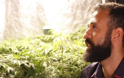 Erik Torquato: NA VOLTA A GENTE  ̶C̶O̶M̶P̶R̶A̶  PLANTA?
